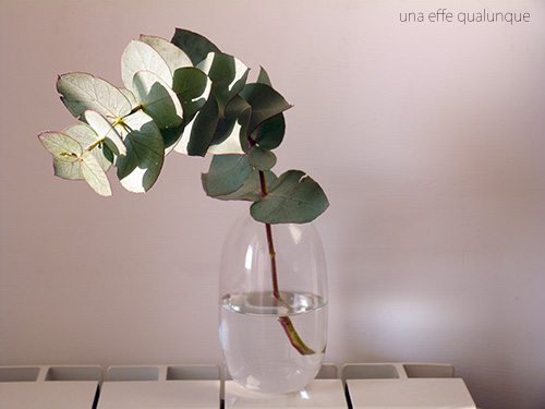 eucalyptus (2)