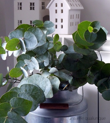 eucalyptus (3)