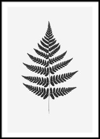 fern (23)