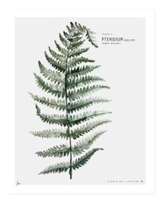 fern (5)
