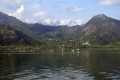 Skadar lake (4)