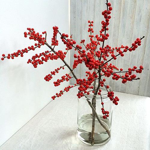 winterberry2