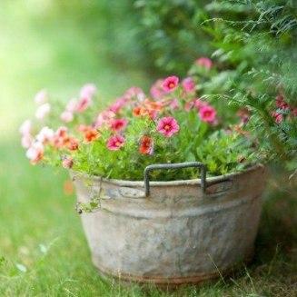 Garden-(15)